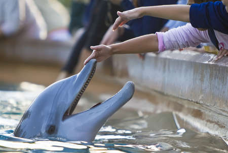 dolphin: Children reaching out to touch a bottlenose dolphins nose  Stock Photo