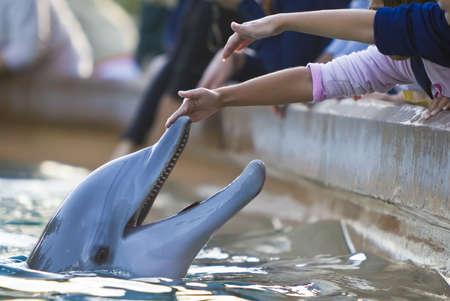 delfin: Dzieci dotarcia do dotyku bottlenose Delfin nosa Zdjęcie Seryjne
