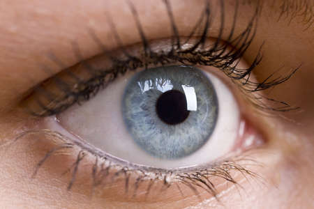 ocular: A macro close up shot of a beautiful female blue eye