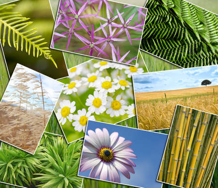 Montage of green natural environments, ferns, an open corn field, plants, trees and leaves, bamboo, flowers and bumble bee photo