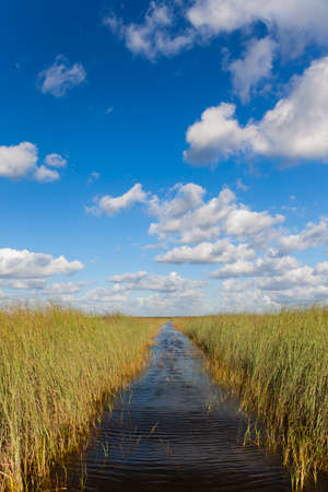 waterway: Waterway through the Florida Everglades or tropical wetlands with blue sky and white clouds
