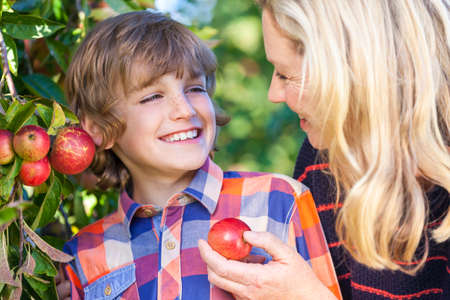 madre e hijo: La madre y el hijo, el niño chico y la mujer, riendo juntos, recogiendo y comiendo una manzana en un huerto al aire libre en sol de verano