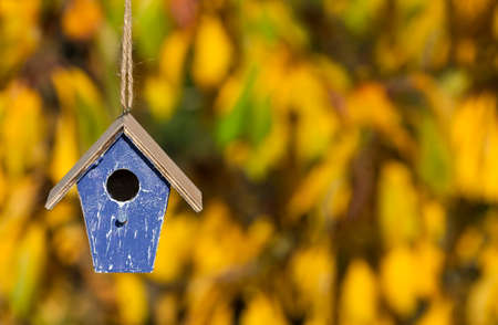 fall leaf: A bird house or bird box in Autumn or Fall sunshine with natural golden leaves background