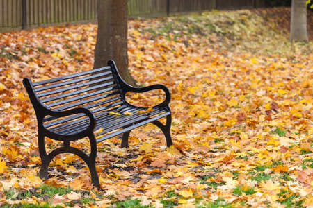 bereavement: Loss or bereavement concept empty park bench surrounded by trees and golden Autumn or Fall leaves Stock Photo
