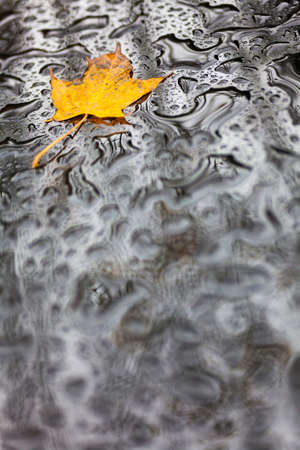 fall leaf: Single golden Autumn Fall leaf on wet weather rain water background
