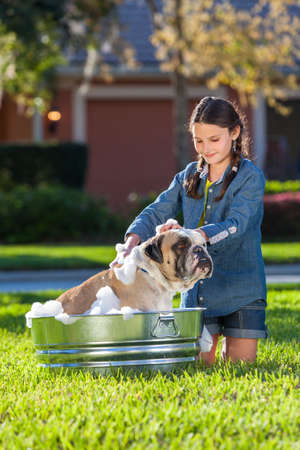 Young girl child washing her pet dog, a bulldog, outside in a metal tub Stock Photo