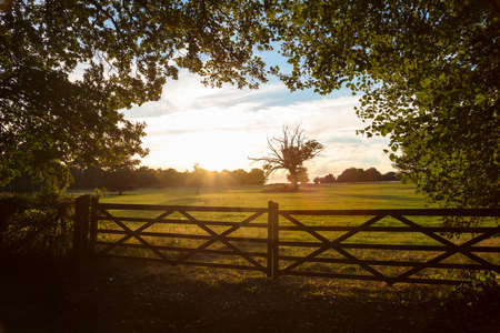 british english: Tranquil view of country farm gate and trees in English or British countryside field at sunset or sunrise