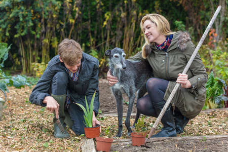 hoe: Happy smiling mother and teenage son, male boy child and woman gardening in a garden vegetable patch with their pet dog Stock Photo