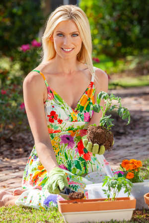 Woman, beautiful blonde female, gardening planting flowers and tomato plants in the garden Stock Photo