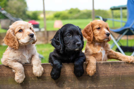 Three cute black and brown puppy dogs together leaning on a wooden fence outside