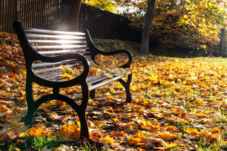 Loss or bereavement concept empty park bench surrounded by trees and golden Autumn or Fall leaves Standard-Bild