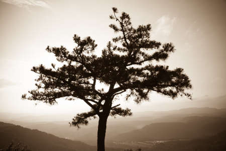 Hazy tree silhouette with mountains in the background photo