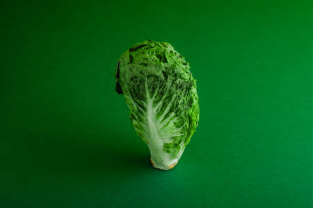 Fresh ripe cos lettuce on green color background
