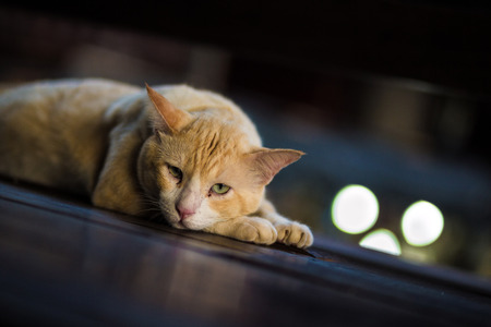 yellow cat lie down on the wood block.Selective focus.