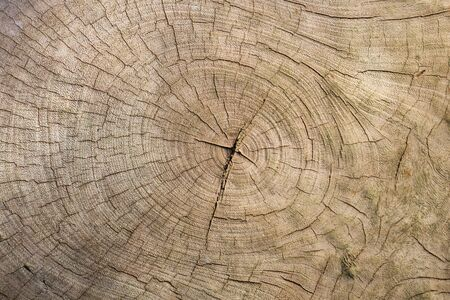 Close up wood texture as a background