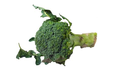 isolated broccoli on a white background