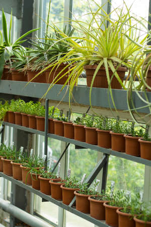growing flowers: Interior of greenhouse for growing flowers and plants. Market for sale plants. Many plants in pots Stock Photo