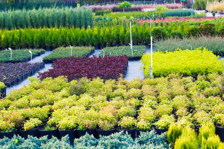 Many different plants and trees in pots offered for sale at garden center Archivio Fotografico