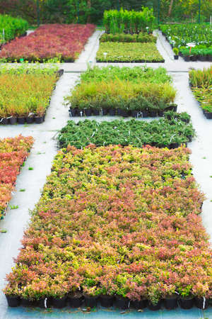 sold small: Rows of seedlings of different plants in pots sold in garden center