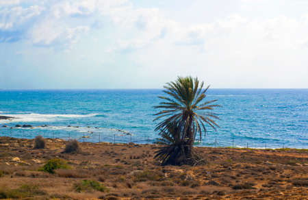 Cyprus Island sea coast. Palm tree on rocky beach against blue Mediterranean sea