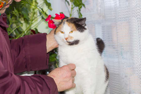 Old woman stroking calico cat with orange eyes