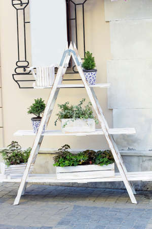 Wooden white shelf with different plants in pots. Potted plants and evergreen Abies small trees on ladder shelf Imagens