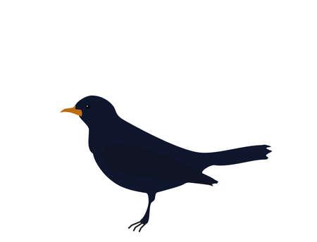 Dark blue bird Songbird (common blackbird) with orange beak on white background, flat design, vector, eps 10 Illustration