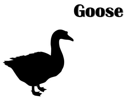 Black silhouette of goose on white background, vector, eps 10
