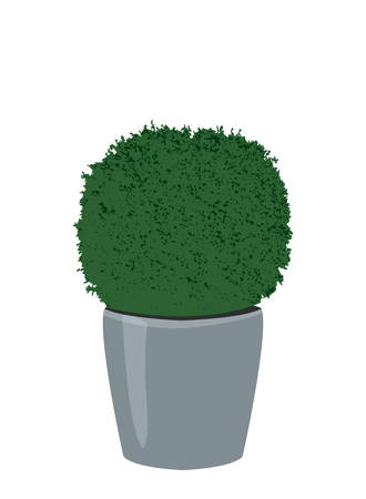 Decorative spherical trimming boxwood plant in pot. Topiary potted tree isolated on white background. Houseplant icon, vector illustration, eps 10 Фото со стока - 127288979