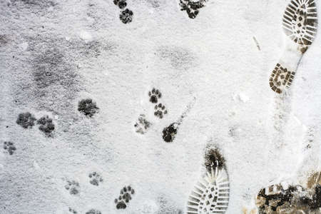 Human and cat footprints on white snow, top view