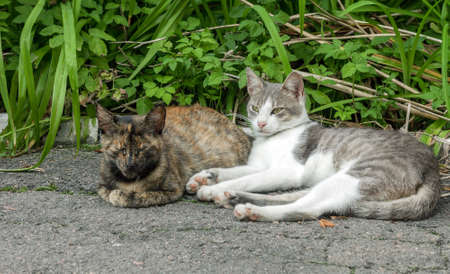 Pair of stray street cats sleeping on sun. Two pussycat in garden
