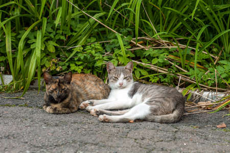 Pair of stray street cats sleeping on sun. Two cats resting in summer garden