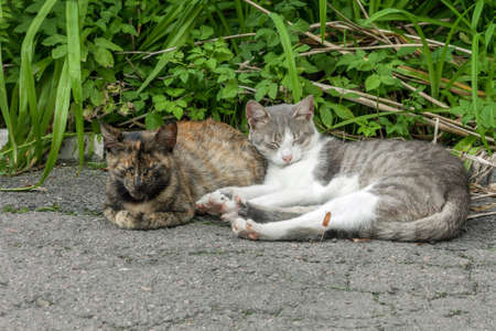 Pair of stray street cats sleeping on sun. Two cats in garden. Kitty stretching