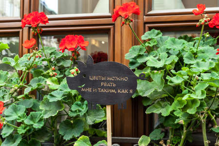 Wooden sign in shape of pig and begonia red flowers. Inscription on signboard: Flowers can be pick only by me and those like me