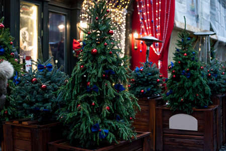 Christmas trees in wooden pots near house in evening. Night city street with potted fir trees