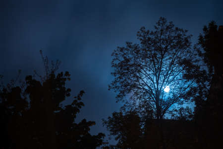Night landscape with silhouettes of trees and full moon glowing through branches