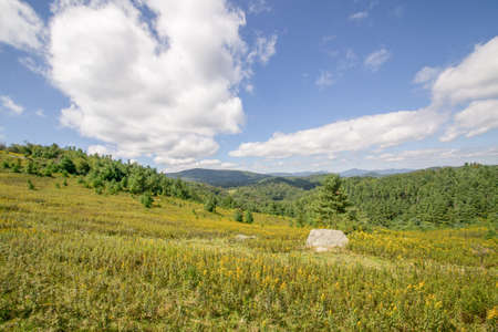 prato montagna: Montagna Meadow  Archivio Fotografico