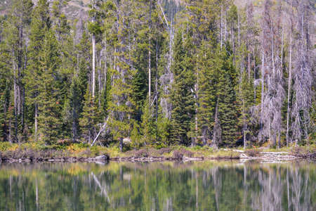 jenny: Jenny Lake Reflection Stock Photo