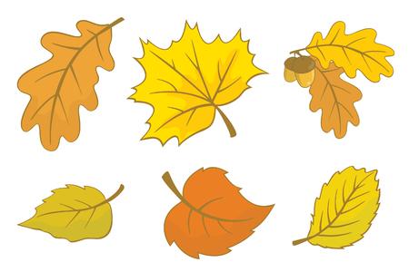 deciduous: Six autumn leaves