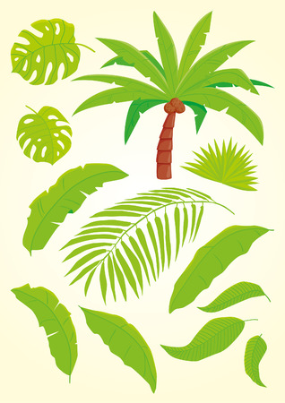 palm leaf: Palm and palm leaves