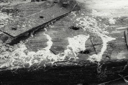 Beached Wood