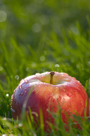 Luscious red delicious apple in wet green grass.