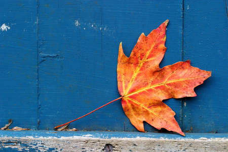 Maple leaf with weathered rustic, painted background