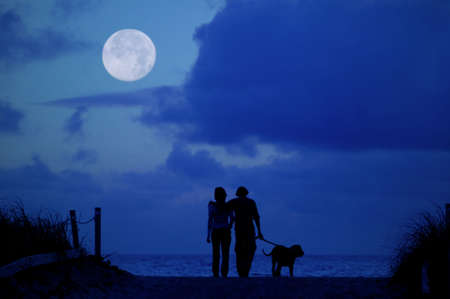 strolling: Loving couple walking there dog on the beach in the moonlight.