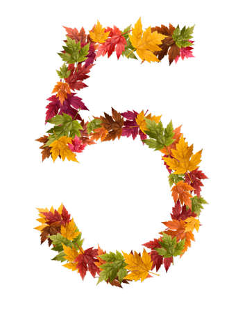 The number 5 made from autumn maple tree leaves.