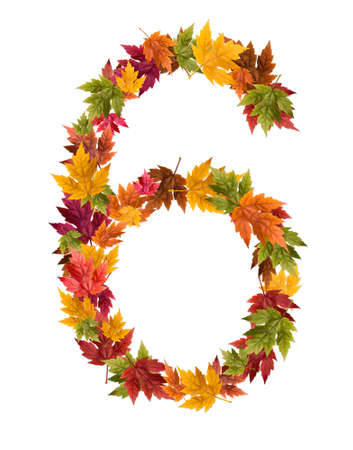The number 6 made from autumn maple tree leaves.