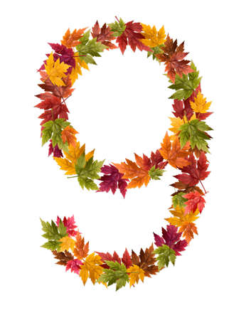 The number 9 made from autumn maple tree leaves.