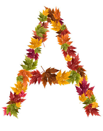 deciduous: The letter A made from autumn maple tree leaves. Stock Photo