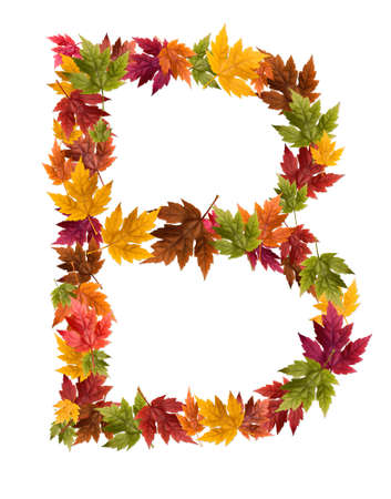 The letter B made from autumn maple tree leaves.