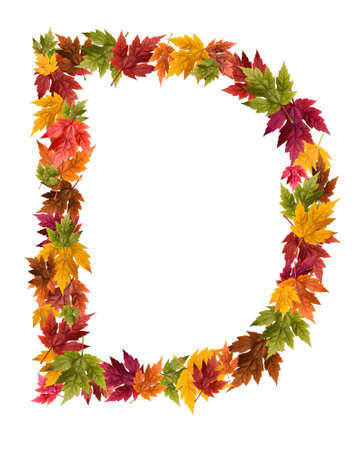 The letter D made from autumn maple tree leaves.